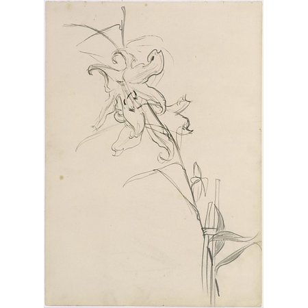 """Lily Study for Carnation Lily Lily Rose Poster Print by John Singer Sargent (American Florence 1856  """"1925 London) (18 x"""