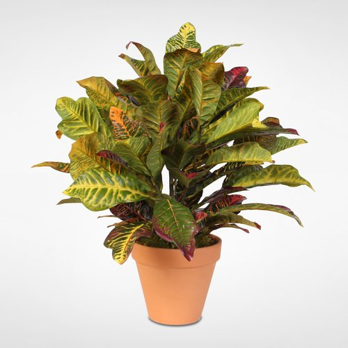 Darby Home Co Floor Croton Plant In Pot Walmart Com