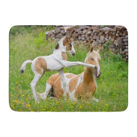 GODPOK Pony Foal Kicks Its Mother with Front Hoof Color Pinto with Tobiano Patterns Also Called Skewbald Rug Doormat Bath Mat 23.6x15.7 - Its Pony
