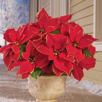 Glitter Holiday Red Poinsettia Bushes with Gold Accents - Set of 3, Indoor and Outdoor Christmas Decor