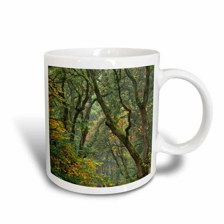 3dRose USA, Oregon, Champoeg State Park. Autumn scenic of forest trees. , Ceramic Mug,