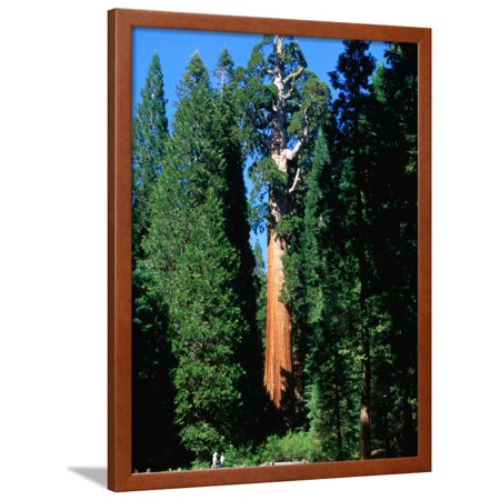Party City In Elk Grove (General Grant Tree in Grant Grove, Kings Canyon National Park, USA Framed Print Wall Art By John Elk)