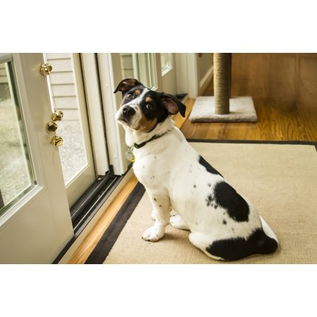 Four month old Fox Terrier Hound mixed breed puppy waiting at the door to go outside.  Poster Print by Janet Horton Terrier Mix Puppy
