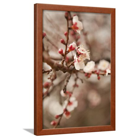 In Bloom XI Framed Print Wall Art By Karyn Millet