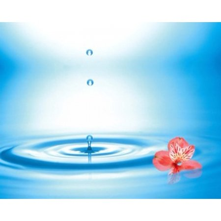 Water drops rising from water rings with small coral flower Canvas Art - Panoramic Images (24 x 20)