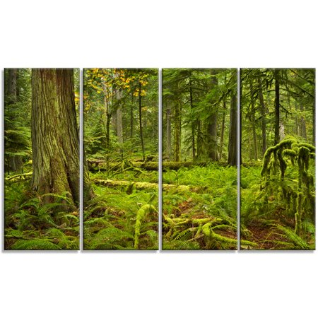 Design Art 'Lush Rainforest in Cathedral Grove' Photographic Print Multi-Piece Image on Canvas