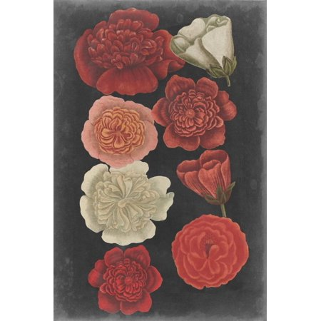 Midnight Roses Print Wall Art By Vision Studio