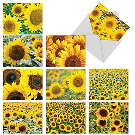 'M6065 SUNNY SIDE UP' 10 Assorted Thank You Greeting Cards Showcasing Big Sunny Fields of Yellow Sunflowers with Envelopes by The Best Card