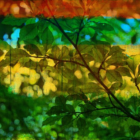 Abstract Leaf Study I Print Wall Art By Sisa Jasper
