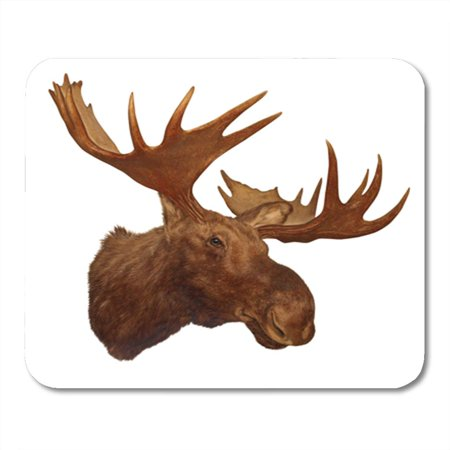 Moose Trophy Antler - KDAGR Taxidermy Moose Head Antler Isolated on White Background Trophy Mousepad Mouse Pad Mouse Mat 9x10 inch