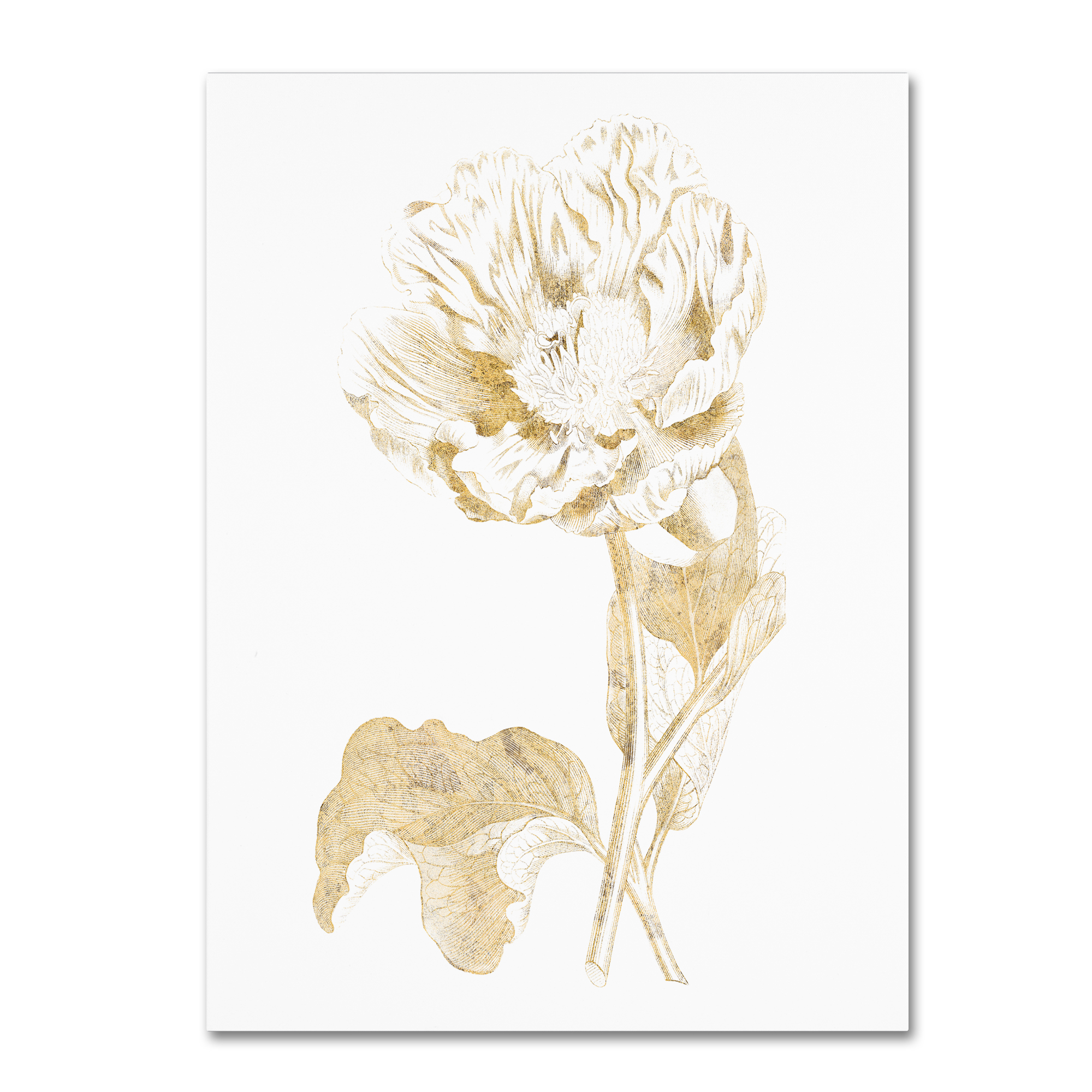 Trademark Fine Art 'Gilded Botanical VII' Canvas Art by Wild Apple Portfolio