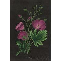 Botanical on Black Chart XIII Canvas Art - Wild Apple Portfolio (12 x 18)