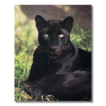 Black Panther Cat Laying in Grass Close Up Photo Wall Picture 8x10 Art Print
