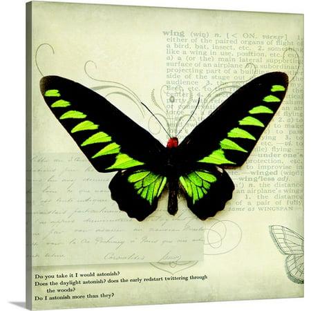 Great Big Canvas Amy Melious Premium Thick Wrap Canvas Entitled Butterflies Script Vi