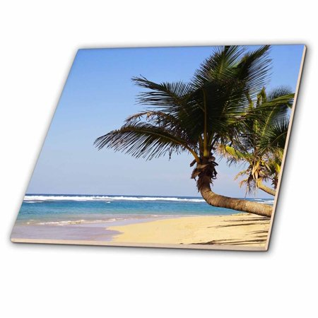 - 3dRose Dreaming of Holidays Ocean and Palm Trees - Ceramic Tile, 12-inch