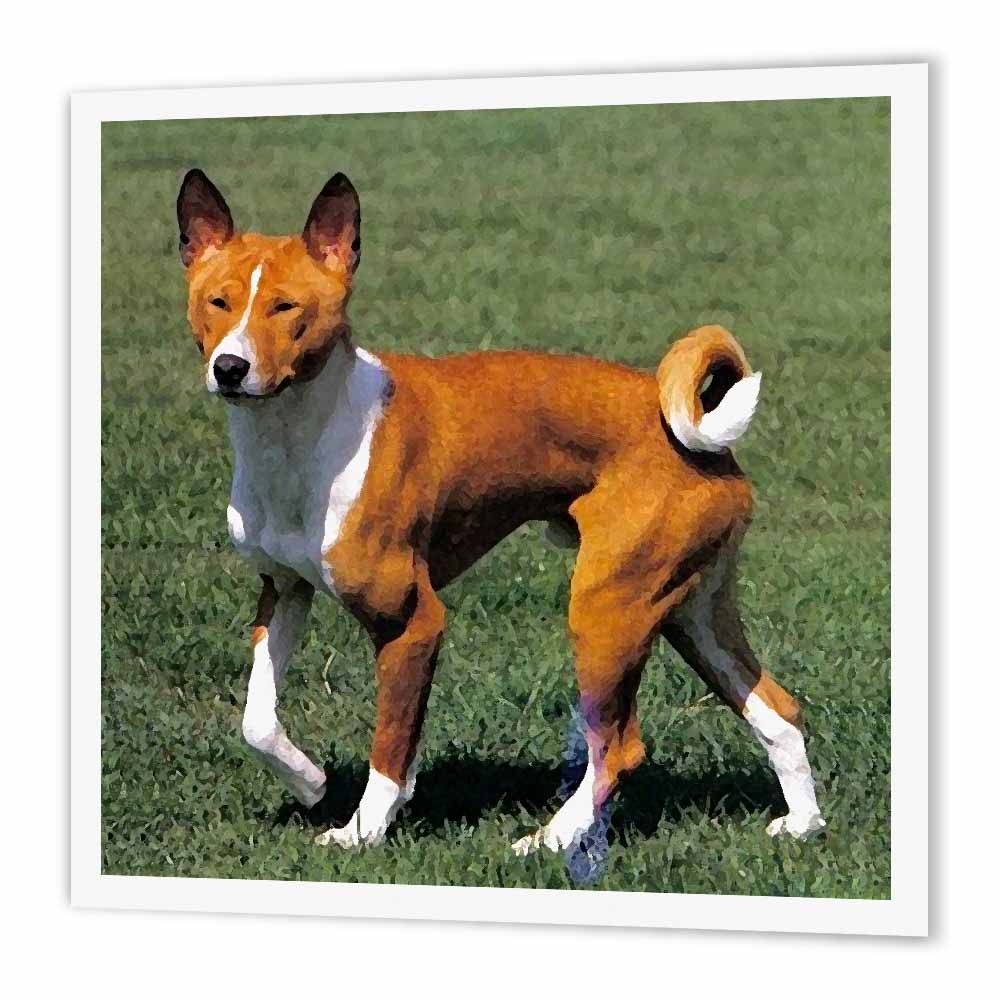 3dRose Basenji, Iron On Heat Transfer, 6 by 6-inch, For White Material