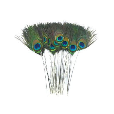 10 Pieces - Stripped Natural Green Peacock Tail Eye Feathers Peacock Feathers Wedding