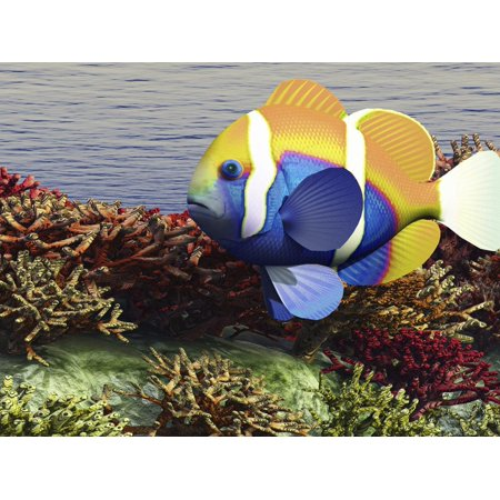 A Colorful Clownfish Swims Among the Corals of An Ocean Reef Print Wall Art By Stocktrek