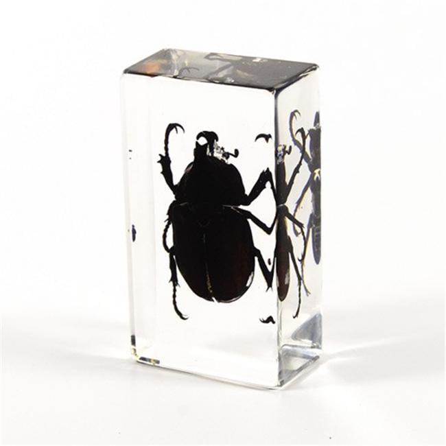 Ed Speldy East PW208 Real Bug Paperweight Regular-Medium-Rhinoceros Beetle