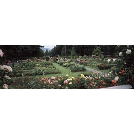 Assorted roses in a garden International Rose Test Garden Washington Park Portland Multnomah County Oregon USA Poster Print