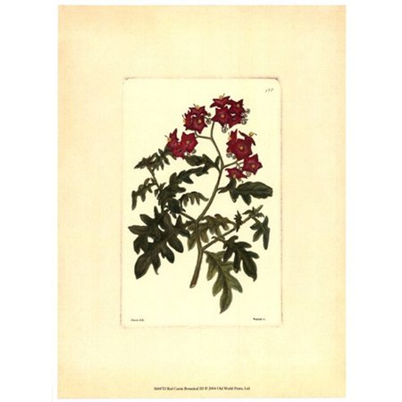 Red Curtis Botanical III Poster Print by Vision studio (10 x 13) (Old Botanical Prints)