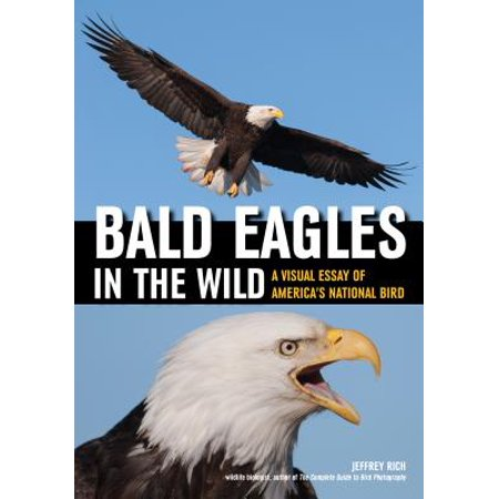 Bald Eagles in the Wild : A Visual Essay of America's National -