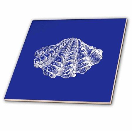 3dRose Dark Blue seashell etching print. Modern Sea shell clam beach ocean - Ceramic Tile, 4-inch