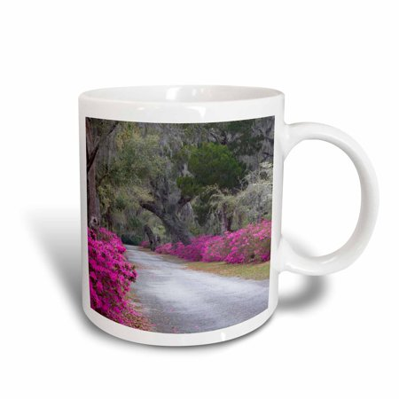 3dRose Georgia, Savannah, Bonaventure Cemetery drive - US11 JWL0375 - Joanne Wells, Ceramic Mug, 11-ounce