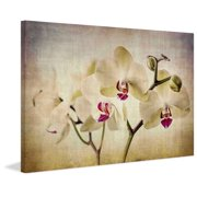 """Marmont Hill """"Pale Orchids Wide"""" by Malek Painting Print on Wrapped Canvas"""