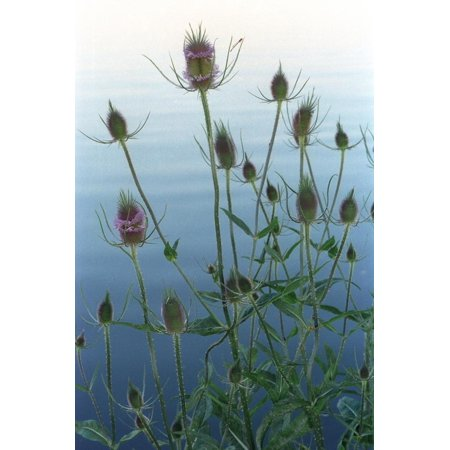 Plants on the edge of lake, Eagle Creek Park, Indianapolis, Indiana, USA Print Wall Art By Anna Miller