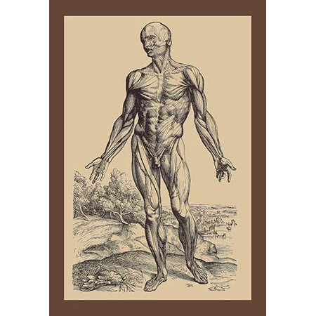 Andreas Vesalius was an anatomist physician and author of one of the ...