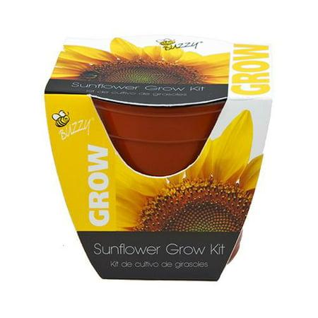 Buzzy 95532 Sunflower Grow Kit, 4-In. Plastic Pot - Quantity - Grow Kit