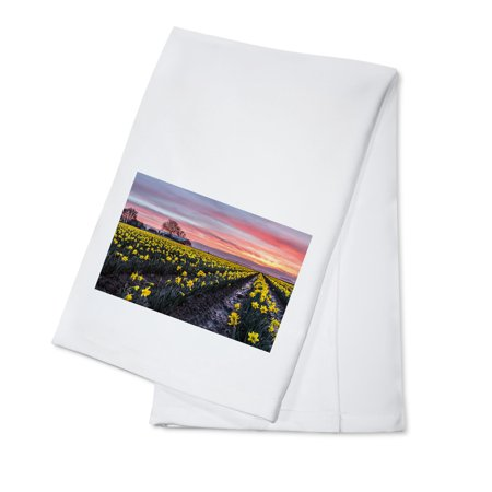 Daffodil Field - Lantern Press Photography (100% Cotton Kitchen (Field Kitchen)