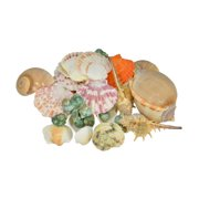 Fantastic Craft Mixed Bagged Shells and Conch Figurine