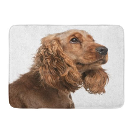GODPOK Head Brown Dog English Cocker Spaniel 2 Years Old in Front of White Cute Headshot Rug Doormat Bath Mat 23.6x15.7 inch