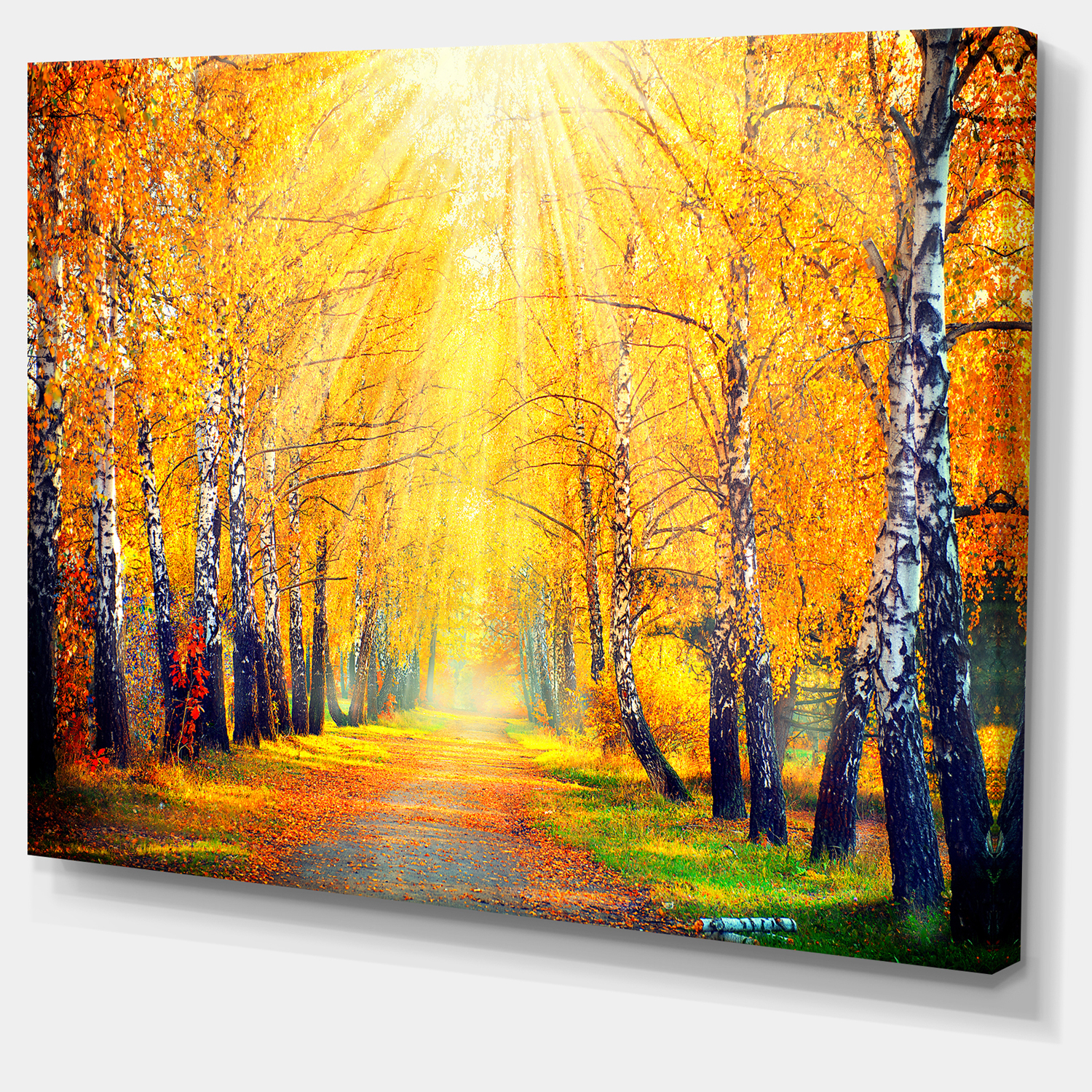 Yellow Autumn Trees in Sunray - Large Landscape Canvas Art Print - image 3 of 4