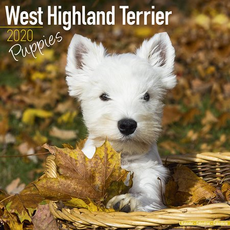 West Highland Terrier Puppies Calendar 2020 - West Highland Terrier Dog Breed Calendar - West Highland Terrier Puppies Premium Wall Calendar 2020