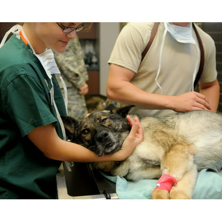 LAMINATED POSTER Dog Animal Patient Veterinarian Veterinary Clinic Poster Print 24 x 36