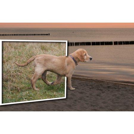 LAMINATED POSTER Mirror Dog Photo Montage Landscape Art Fantasy Poster Print 24 x 36](Montage Photo Halloween)