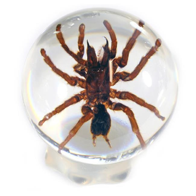 ED SPELDY EAST GL09 Globe  Small  Tarantula  with Stand
