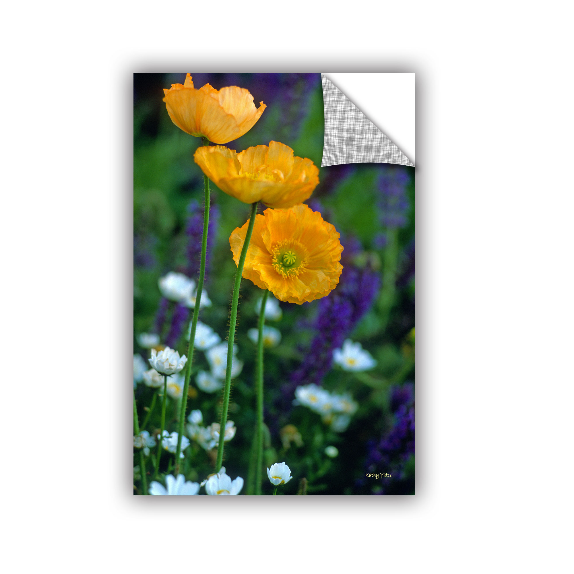 ArtWall ArtApeelz La Playa Poppies by Kathy Yates Photographic Print on Canvas