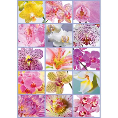 Educa Collage of Flowers Jigsaw Puzzle