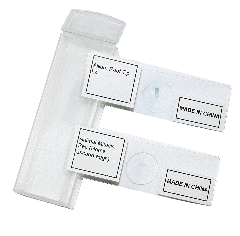 Vision Scientific VSH121 Prepared Slide Set – Mitosis (Set of 2)