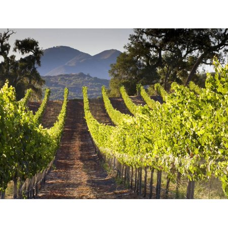 Arroye Grande, California: a Central Coast Winery Print Wall Art By Ian Shive - Halloween Parties Central Coast