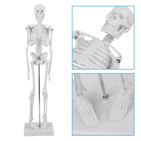 45cm Human Anatomical Skeleton Model With Stand for Doctor/Student, Removable and Movable Parts, Simulate The Human Body Movement, Human Skeleton Model
