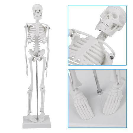 YMIKO Human Anatomical Skeleton Model w/ STAND for Doctor/Student,Anatomical Skeleton -