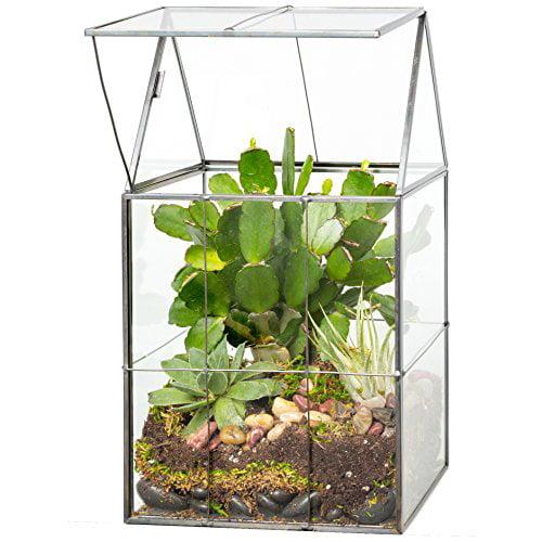 Glass Terrarium, Succulent & Air Plant (Hinged)