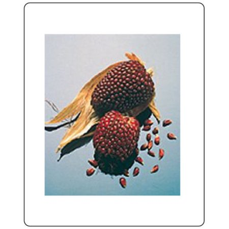 Corn Strawberry Ornamental Great Heirloom Vegetable Can Also Be Used for Popcorn 200 Seeds