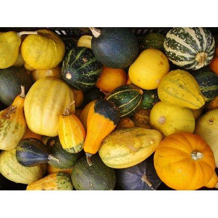 LAMINATED POSTER Pumpkin Nature Autumn Thanksgiving Gourd Poster Print 24 x 36](Gourd Pumpkin)