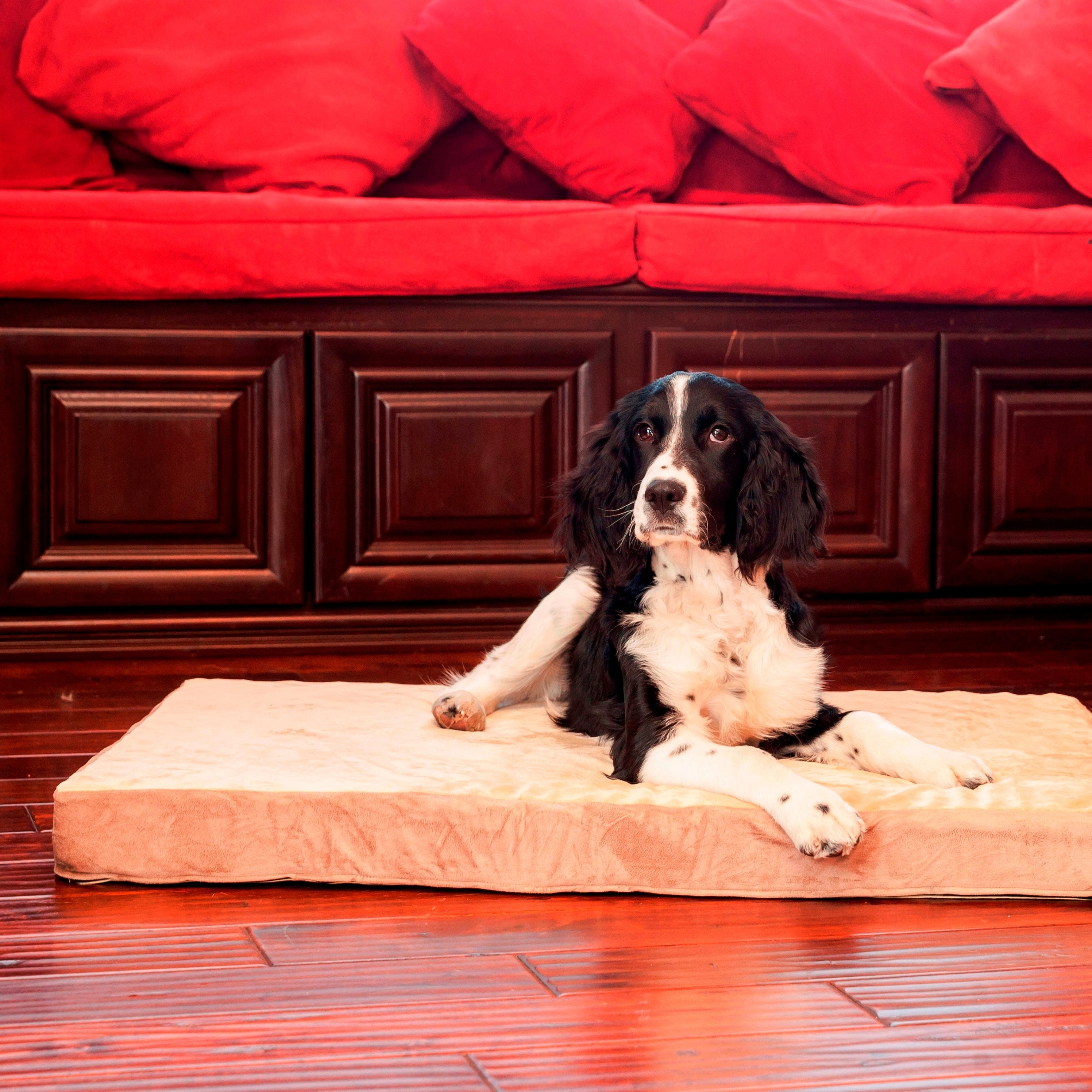 Integrity Bedding Integrity Orthopedic Memory Foam Rectangle Dog Bed (SM-XL)
